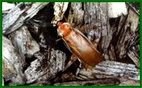 Все о тараканах Mdmt2811