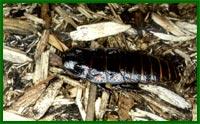 Все о тараканах Mdmt2813