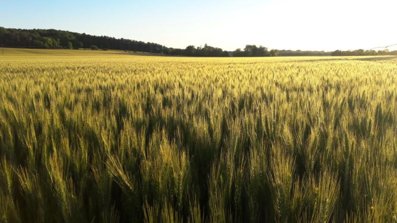 Suivis blés 2019 - Page 9 20190510