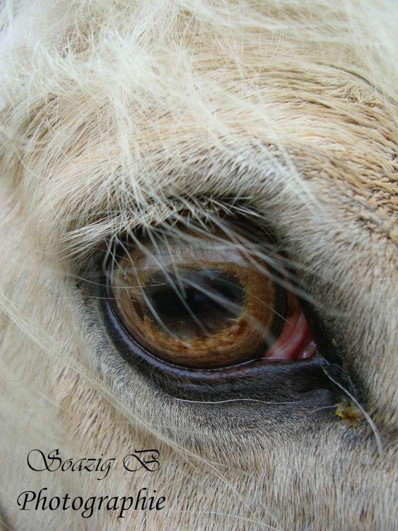 """Concours photo """" oeil de chevaux"""" venez votez ! Datail10"""