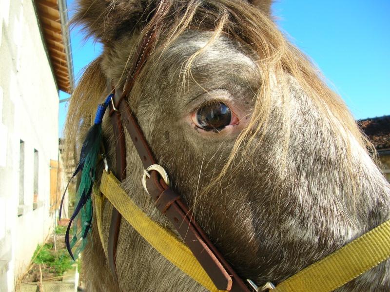 """Concours photo """" oeil de chevaux"""" venez votez ! Dscn6910"""