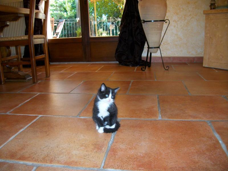 *** spécial *** photos de nos animaux *** - Page 2 Imgp0110