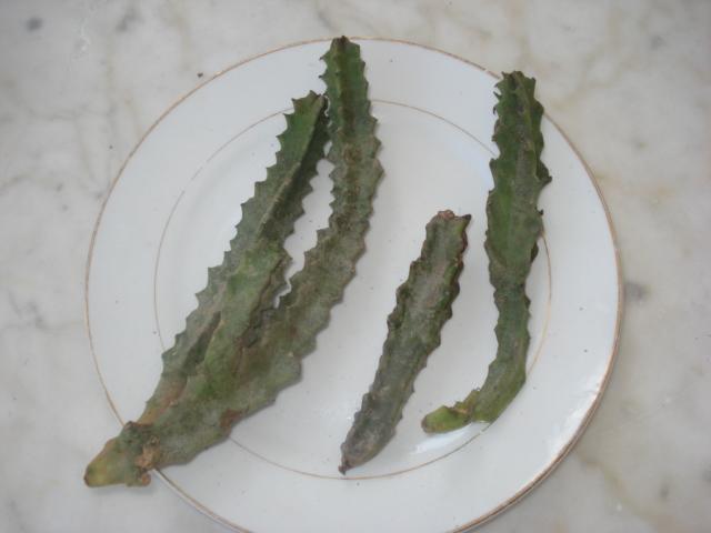 Aidez-moi à les identifier-merci Cactus12