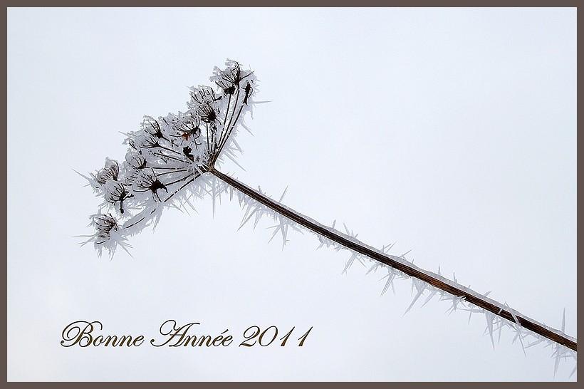 Bonne Année 2011 (Leky) Img_8517