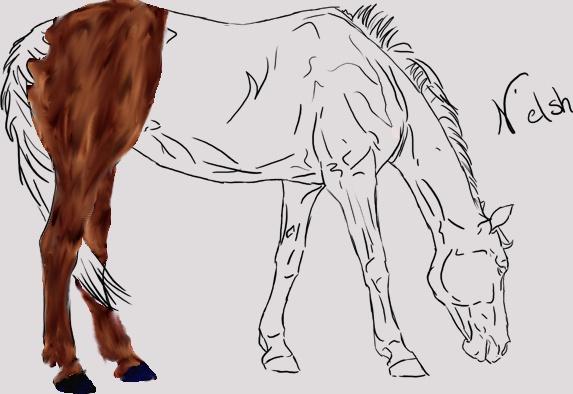 colo à plusieurs cheval de sport Colabo10