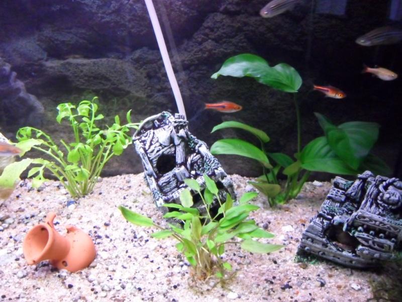 mes plantes se decomposent .... Sam_0015