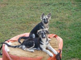 Donne chienne en Dordogne 140310