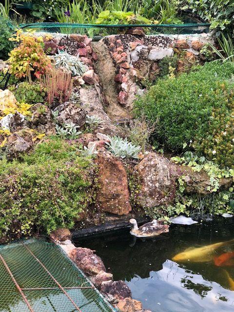 Rocaille du bassin avec son mur végétal et son lagunage Cascad10
