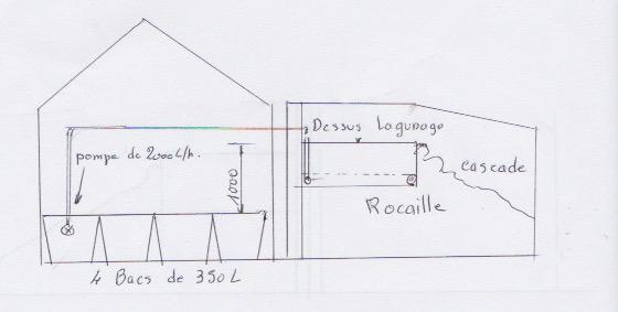 Rocaille du bassin avec son mur végétal et son lagunage Croqui10