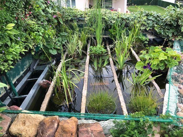 Rocaille du bassin avec son mur végétal et son lagunage Laguna10