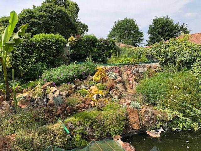Rocaille du bassin avec son mur végétal et son lagunage Mur10