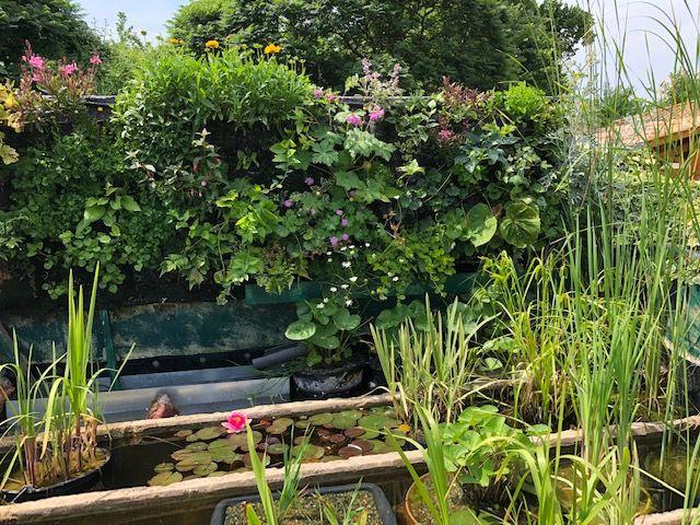mur vegetal et lagunaire Mur310
