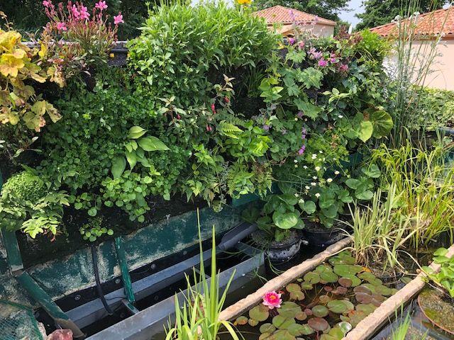 mur vegetal et lagunaire Mur410