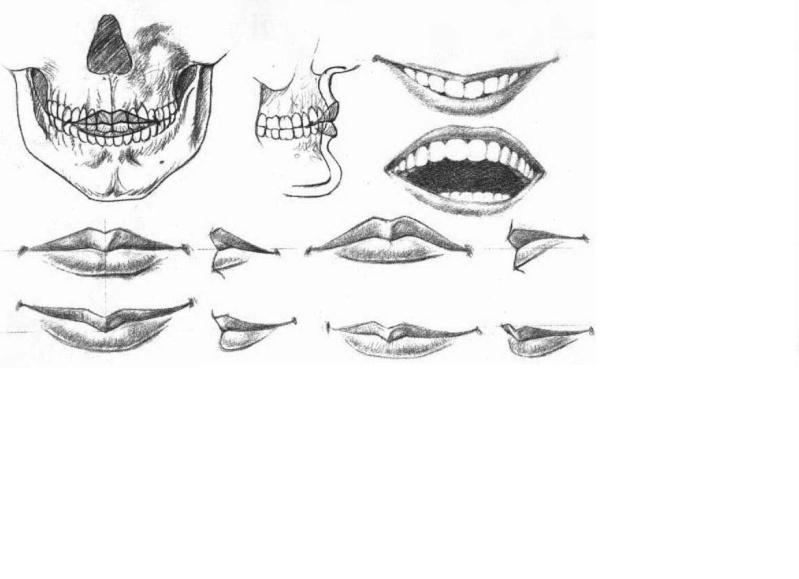 دروس تعليم الرسم...... دراسة الفك والفم والشفا يف. 210