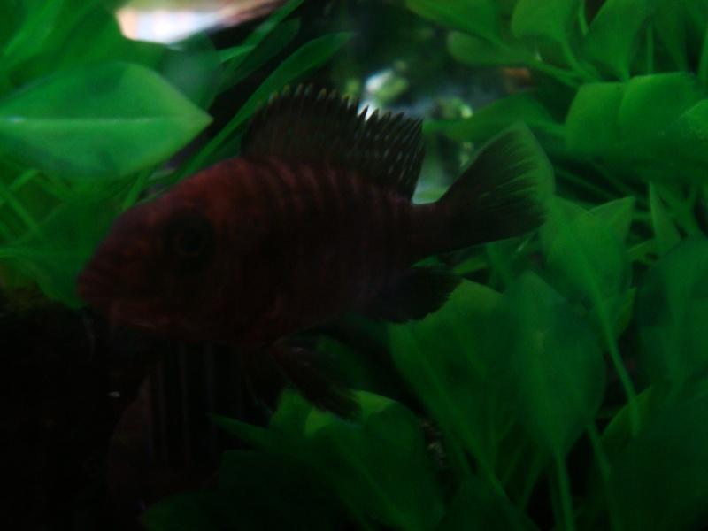 Identification de poissons Dsc01112