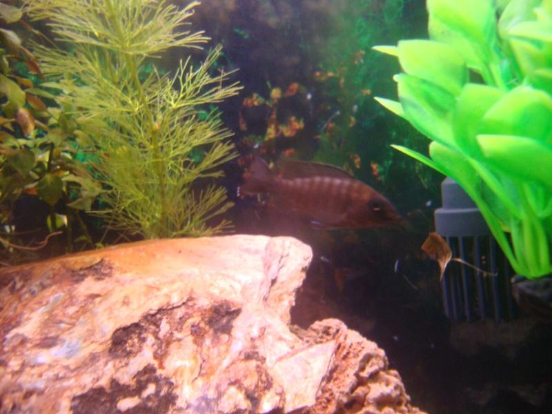Identification de poissons Dsc01115