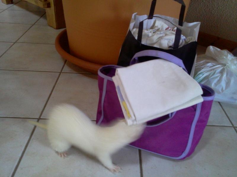 [Décédée] Mini-Pousse, femelle albinos Photo018
