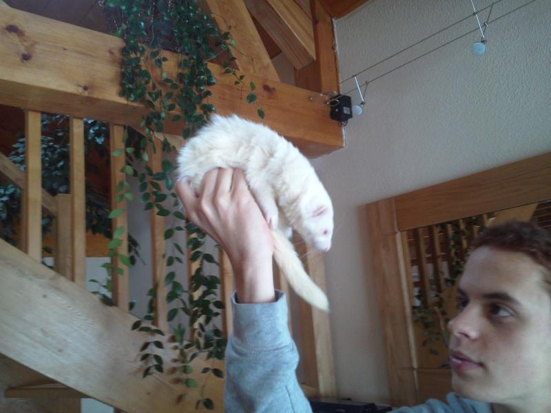 [Décédée] Mini-Pousse, femelle albinos Photo019
