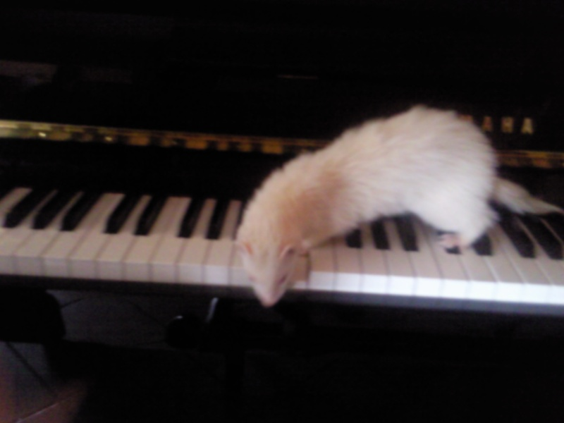[Décédée] Mini-Pousse, femelle albinos Photo031
