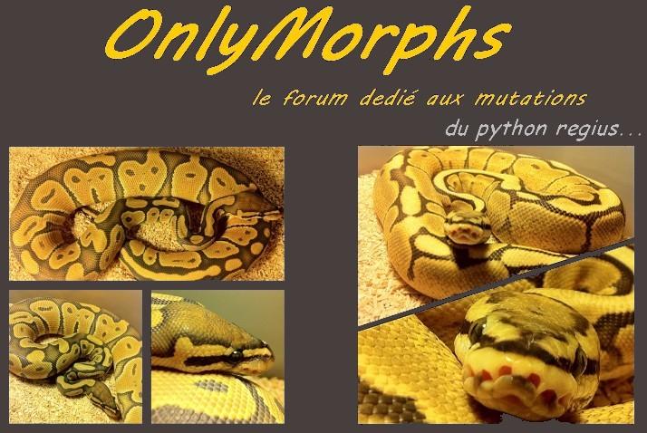 OnlyMorphs