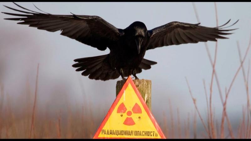Цивилизация страшнее радиации Aao-410