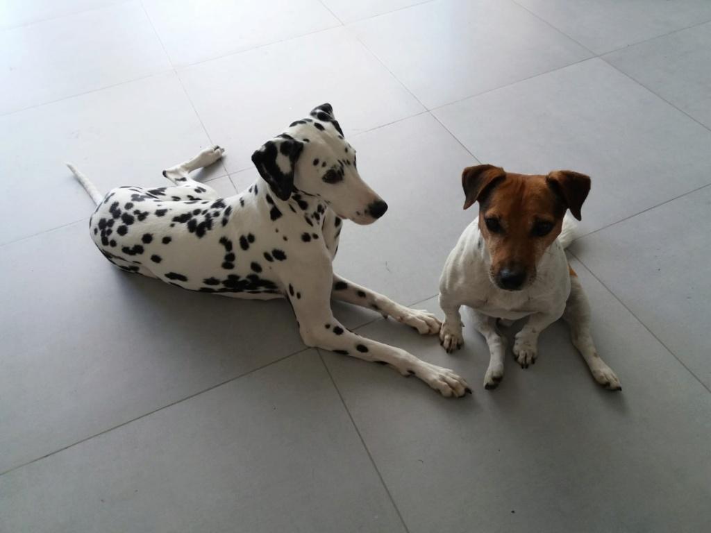 NIKO chien parfait, Jack Russel 5 ans 8/9 kg, région parisienne Img_0015