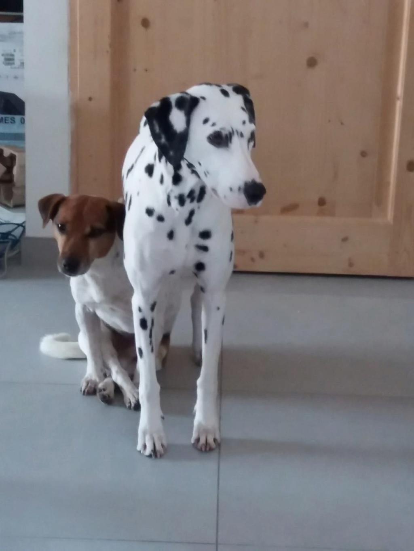 NIKO chien parfait, Jack Russel 5 ans 8/9 kg, région parisienne Img_0018