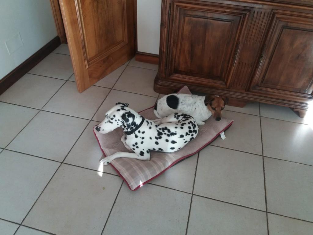 NIKO chien parfait, Jack Russel 5 ans 8/9 kg, région parisienne Img_0019