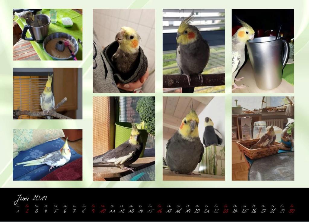 Meine Mitbewohner-eine Schöpfung JHWH - Seite 4 Kalend10