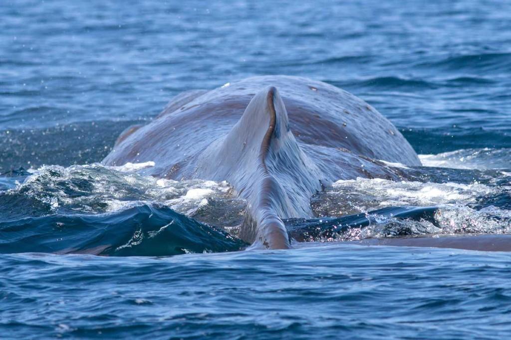Jona und der Wal - oder war es was anderes! Pottwa10
