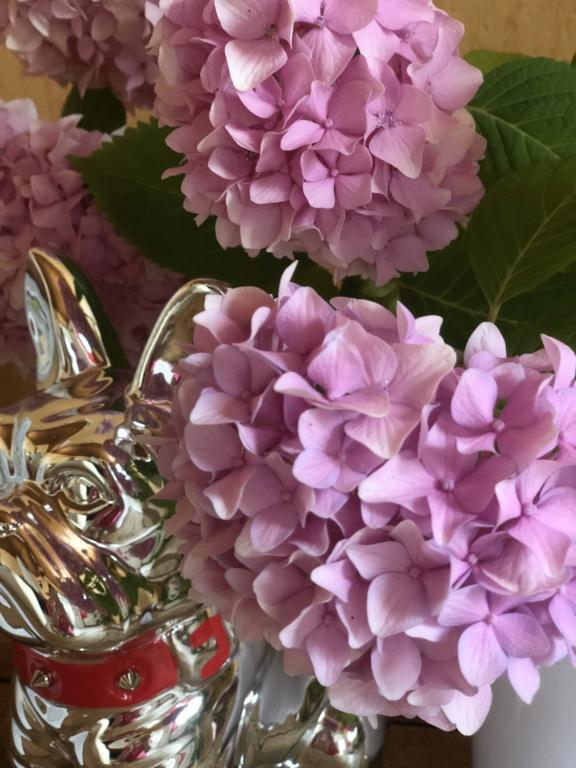 5 juillet : une ou des fleurs 522b1910