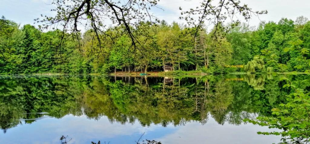 Mes balades dans les 1.000 étangs  ( Vosges )  - Page 4 19433811