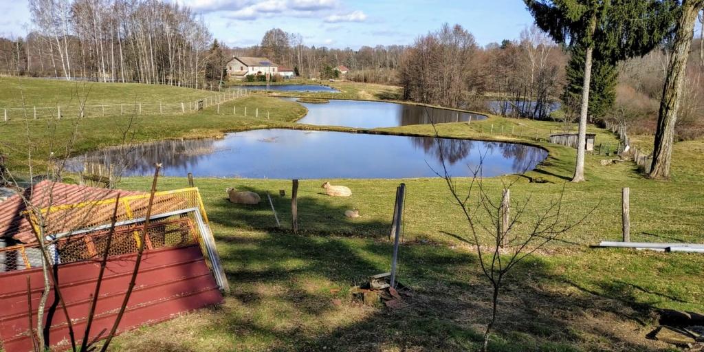 Mes balades dans les 1.000 étangs  ( Vosges )  - Page 2 610