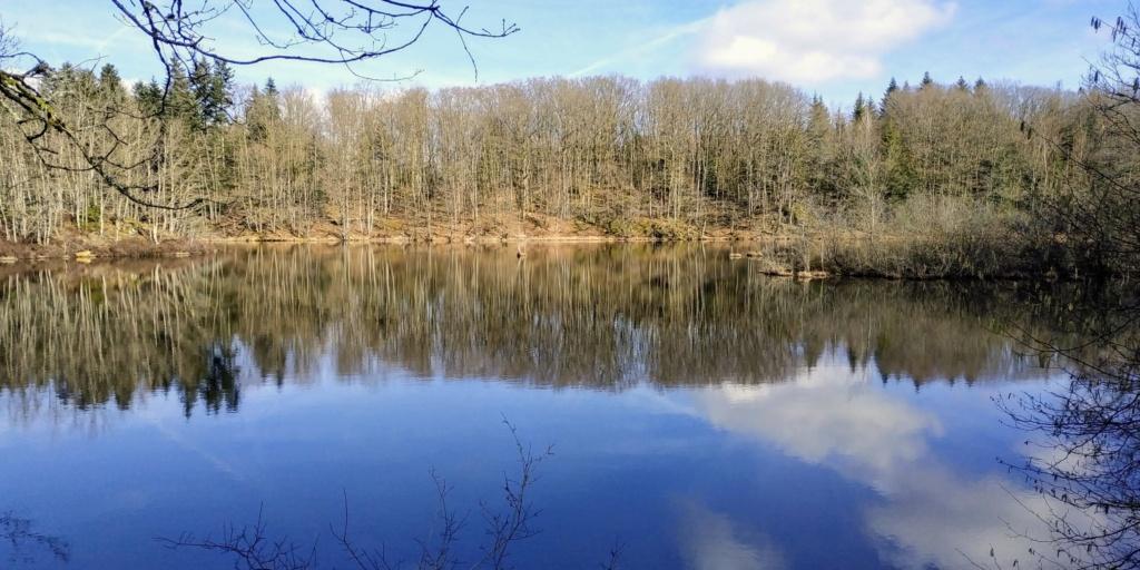 Mes balades dans les 1.000 étangs  ( Vosges )  - Page 2 6910