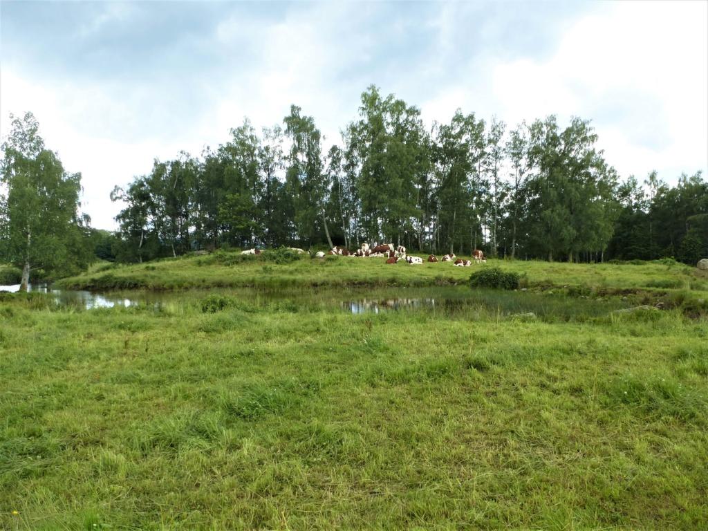 le repos  sur le plateau de 1.000 étangs  Dd0110