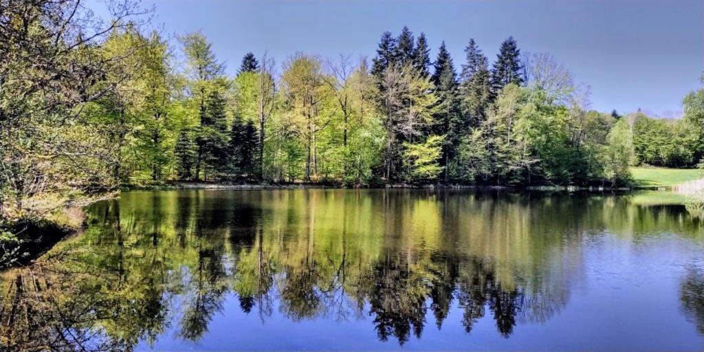 Mes balades dans les 1.000 étangs  ( Vosges )  Ecroma10