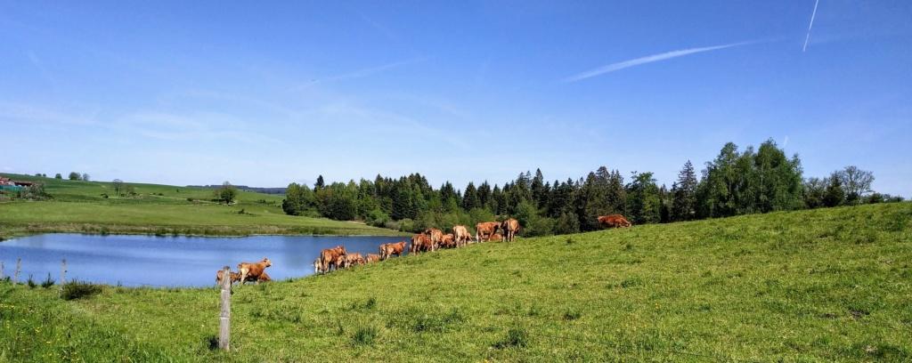 Mes balades dans les 1.000 étangs  ( Vosges )  Esmoul10