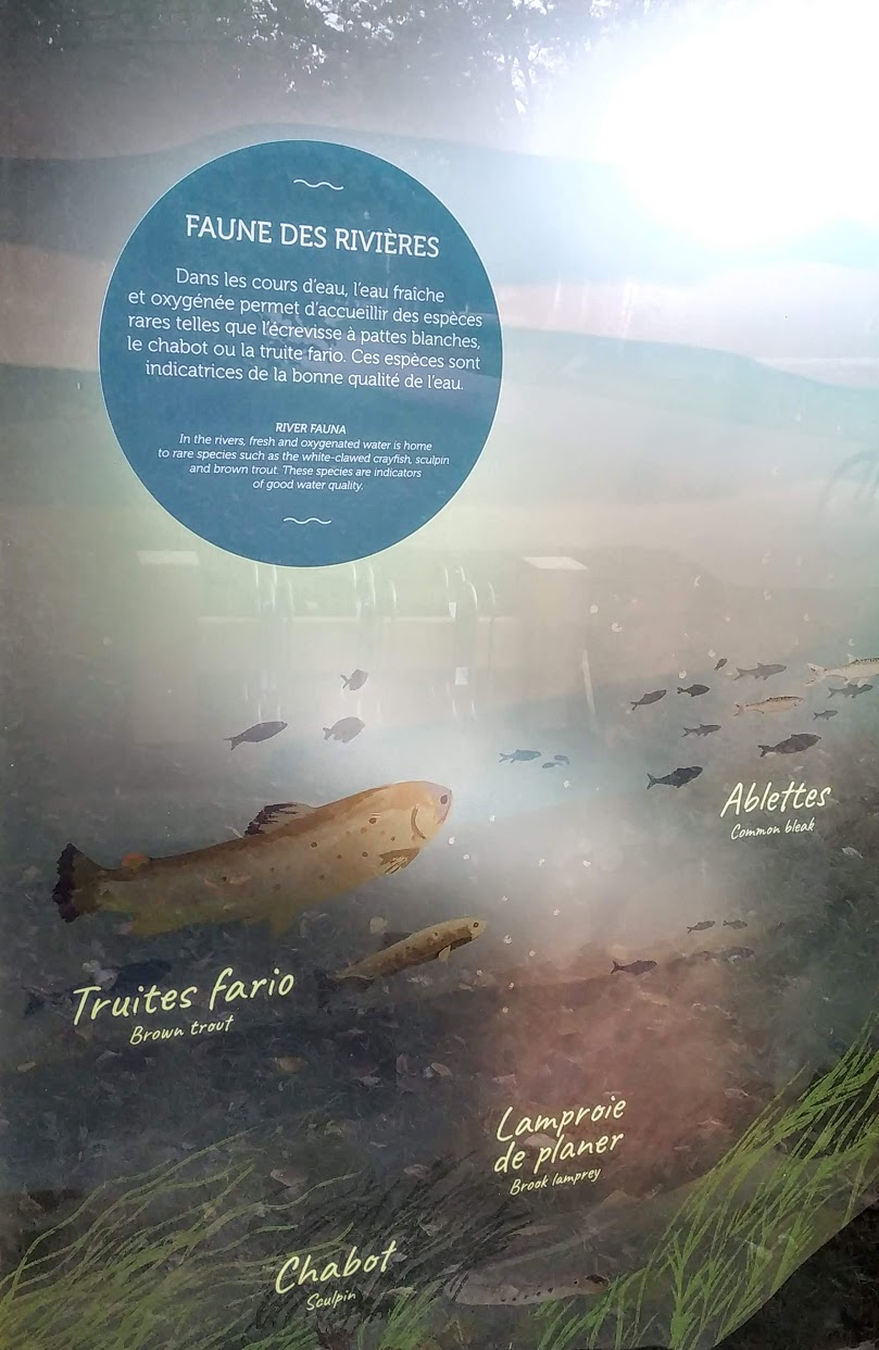 Mes balades dans les 1.000 étangs  ( Vosges )  Fish10
