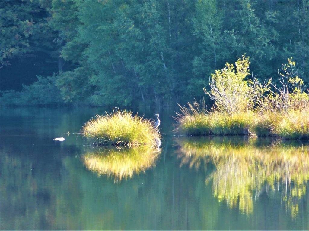 Mes balades dans les 1.000 étangs  ( Vosges )  - Page 4 Jj10