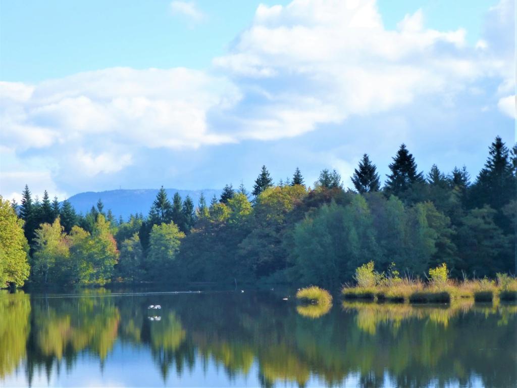 Mes balades dans les 1.000 étangs  ( Vosges )  - Page 4 Jj110