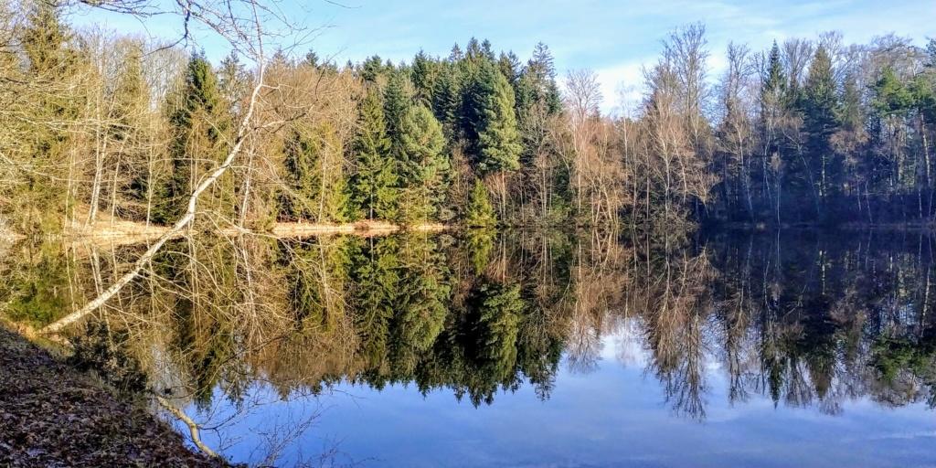 Mes balades dans les 1.000 étangs  ( Vosges )  - Page 2 Le_ser10