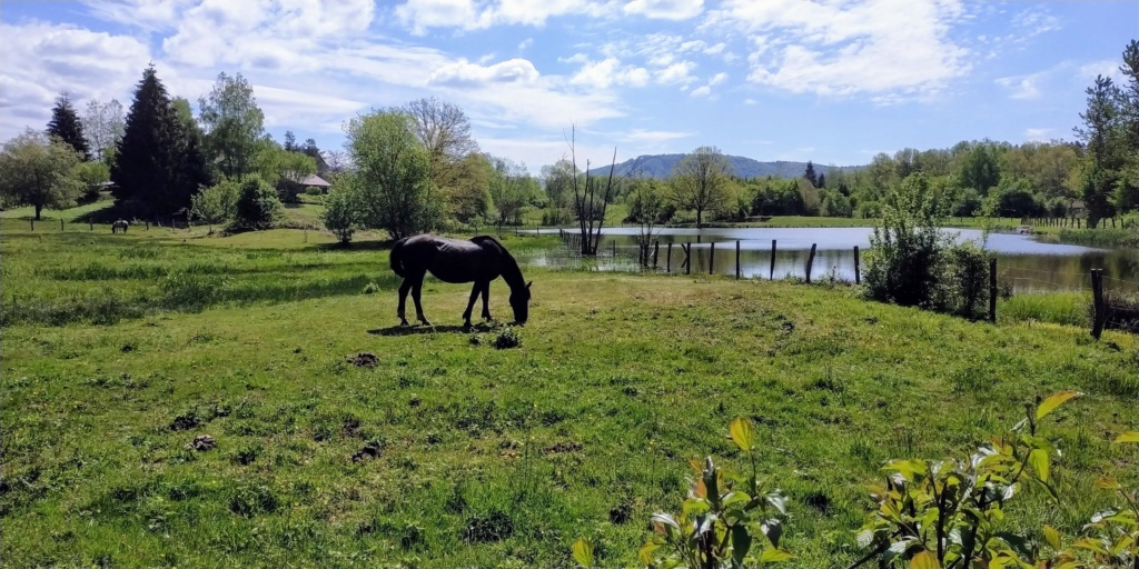 Mes balades dans les 1.000 étangs  ( Vosges )  Les_gr10