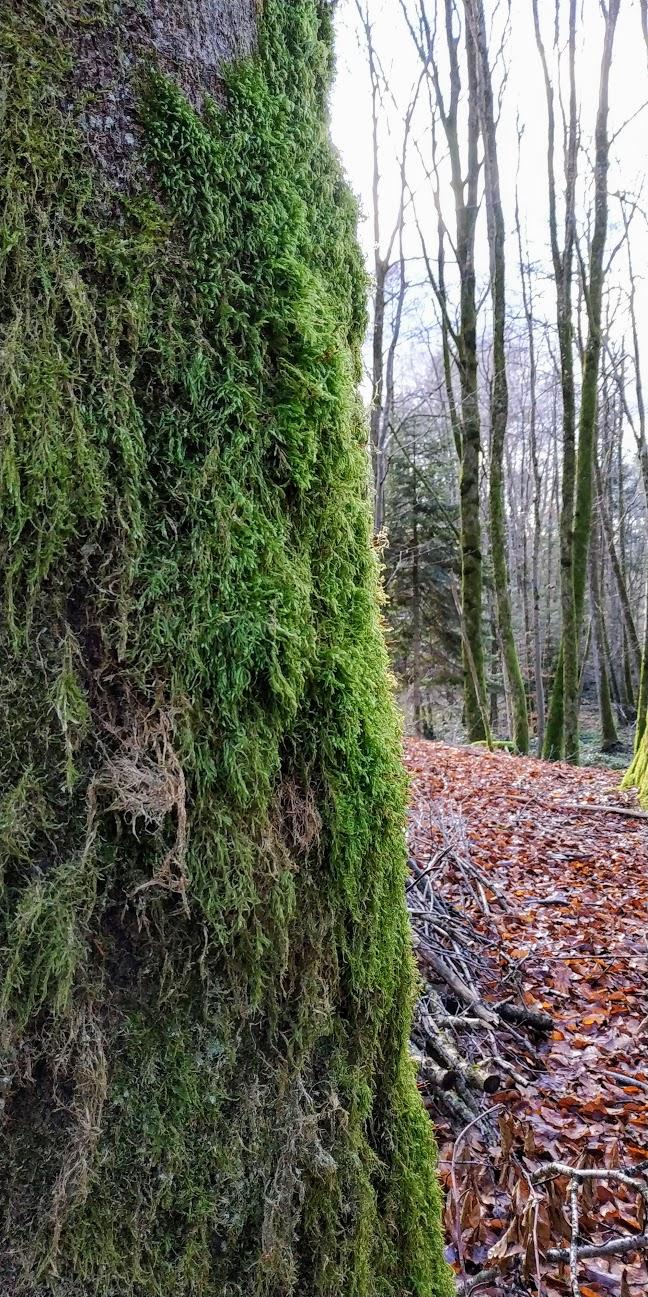 Mes balades dans les 1.000 étangs  ( Vosges )  - Page 2 Mou10