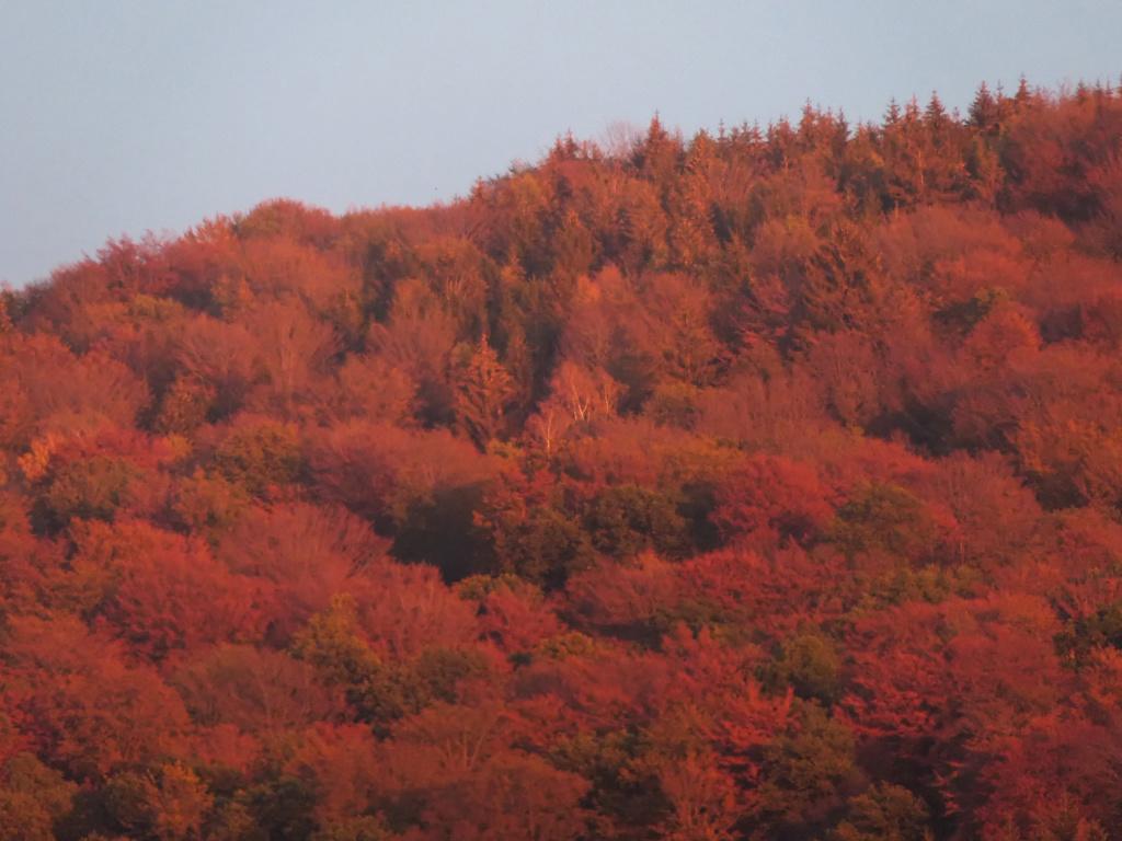 Le ROUGE  des Vosges depuis notre balcon  P1060918