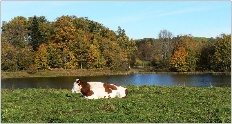 le repos  sur le plateau de 1.000 étangs  P1110210