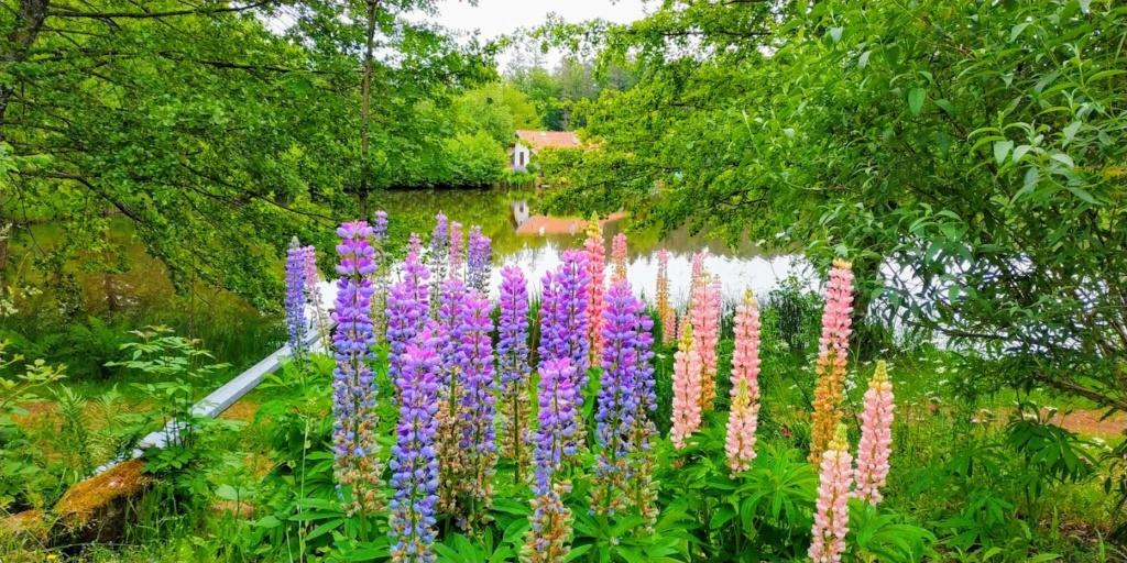 Mes balades dans les 1.000 étangs  ( Vosges )  Pic_2027