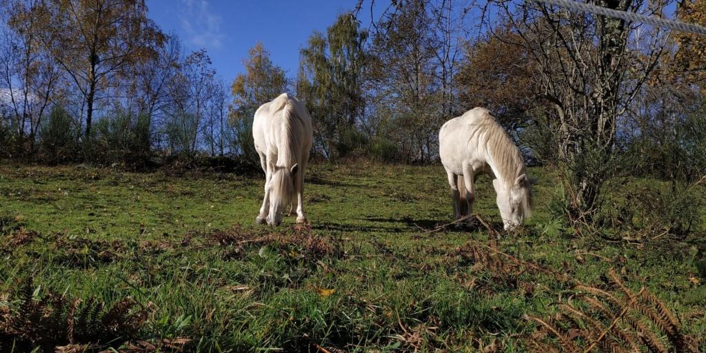 Mes balades dans les 1.000 étangs  ( Vosges )  White_10