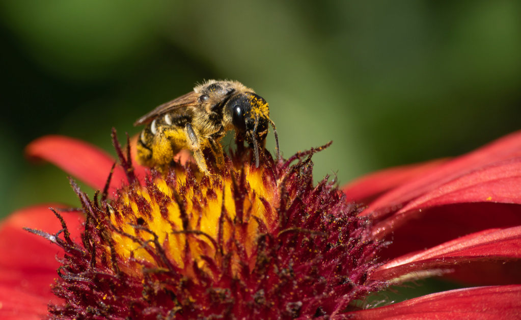 Bain de pollen P1570814