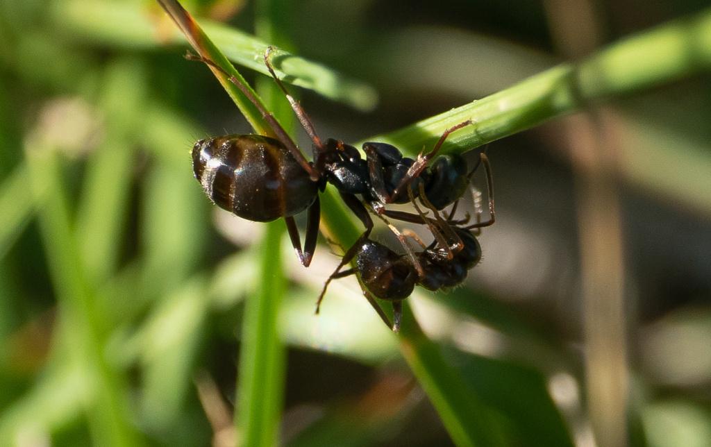 Panique à la fourmilière  P1570816