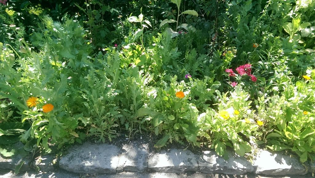 Wildblumen ( Sammelthread) - Seite 18 Imag1414